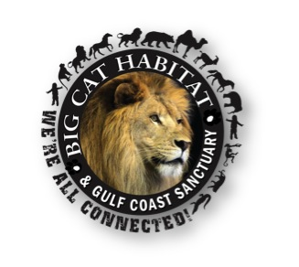 Big Cat Habitat Logo Shadow