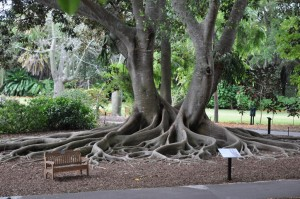 Selby Gardens Tree